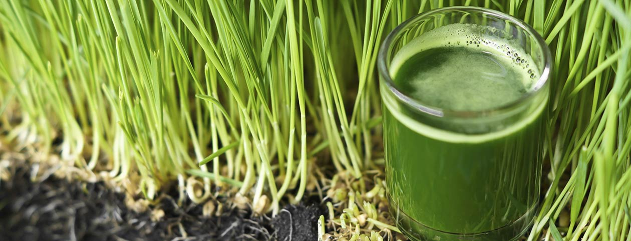 Health Benefits of Wheatgrass one of top superfoods