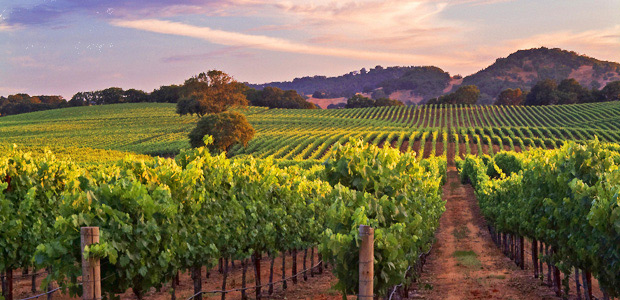 Sonoma-Vineyard-John-Grey-Marriage-Retreats
