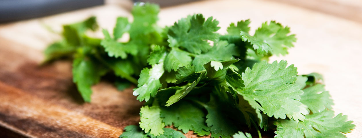 health-benefits-of-cilantro-cover