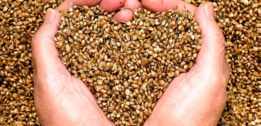 hemp-seed-nutrition-fact-2