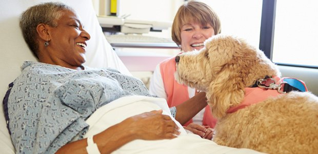 pet-therapy-for-stroke-patient